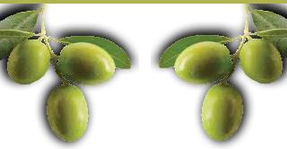 olivesgreen